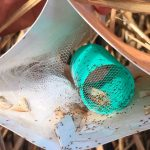 Livro sobre monitoramento de adultos da broca-da-cana será lançado no 6º Tecnobio CANA