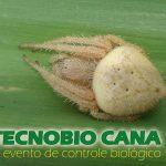 Em dia premiado, 6º Tecnobio CANA chega ao fim, representando mais de dois milhões de hectares de cana-de-açúcar
