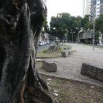 Joaninhas serão soltas em fícus de Belo Horizonte para o controle da mosca-branca